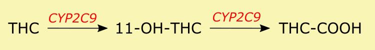 THC metabolism CYP2C9
